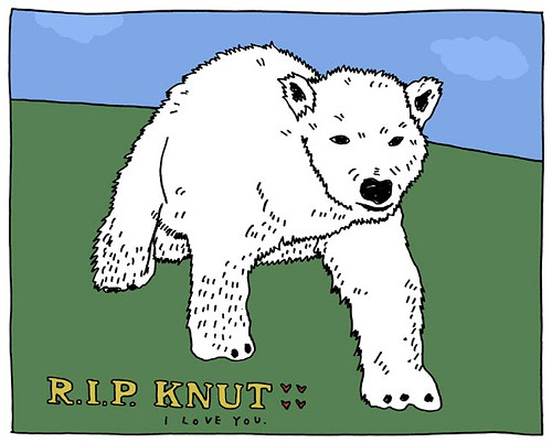 Knut is a problem bear who has become addicted to human beings, Peter Arras said.