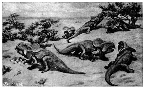 Old-timey illustration of Protoceratops.