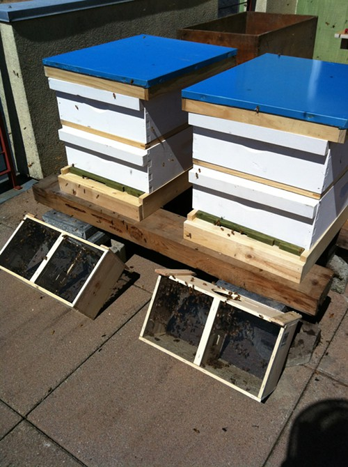The closed hives with the travel boxes in front so the stragglers can get out
