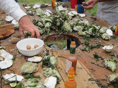 oysters_by_K._Marx.jpg