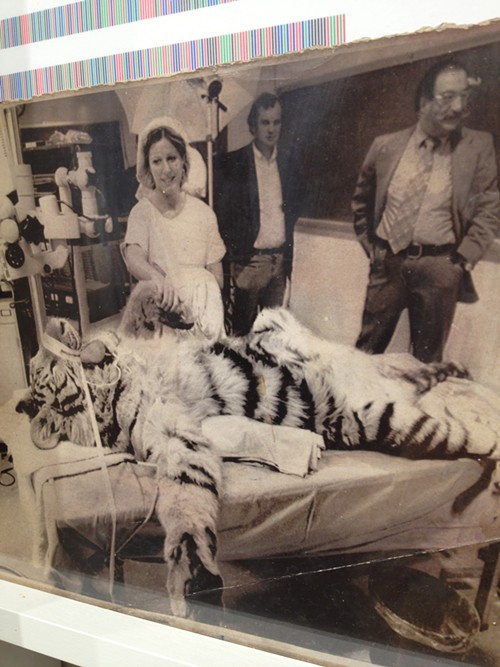 One of Rossanos boxes contains this unexplained archival photograph of a tiger in a lab.
