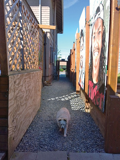 This smart dog is heading toward the patio at the Station on Beacon Hill, which is one of Seattle's Least Expected Great Decks.