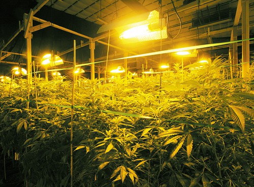 POT POWER: Monkey Grass Farms estimates their electricity bill will be $4,000.