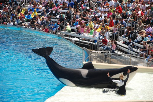 Three former SeaWorld workers said they experienced long hours and dangerous work.
