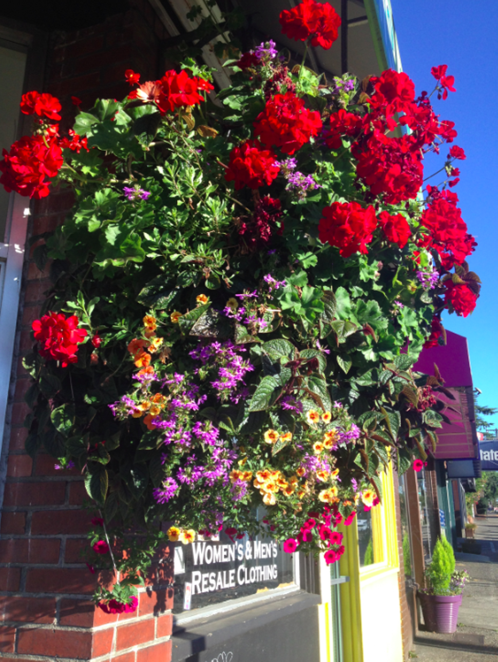 Hanging Flower Baskets Seattle : The morning news ok who s stealing gigantic flower