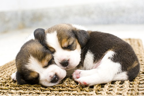 I couldnt think of a good way to illustrate this post, so why dont you enjoy this photo of some cute sleeping puppies, instead?
