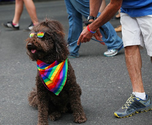 Um, also, who doesnt love a poodle in sunglasses?