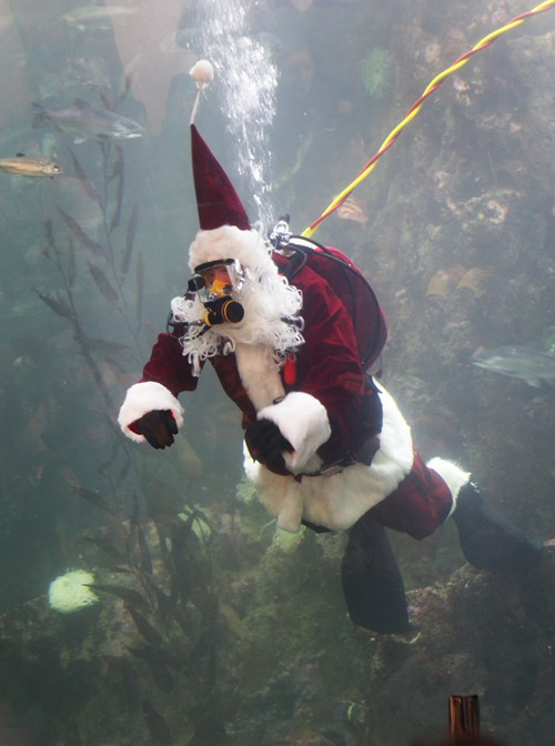 Ill take Underwater Diving Santa, before boring ole Department Store Santa, ANY DAY. Thanks Capt Carl and the Seattle Aquarium.